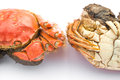Two cooked crabs Royalty Free Stock Photo