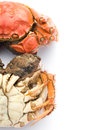 Two cooked crabs on a white background with clipping path Stock Photos