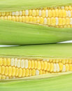 Two corn fresh color with green peel Stock Photo