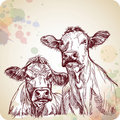 Two cows hand draw sketch & color paint Stock Photography