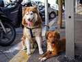 Two cute dogs on street Royalty Free Stock Photo