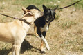 Two cute dogs talking playing and having fun from shelter outsid Royalty Free Stock Photo