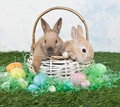 Two cute easter bunnies sitting basket easter eggs easter grass all around them Royalty Free Stock Photo