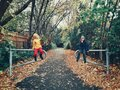 Two cute funny Caucasian children boy and girl sitting on fence in park holding large maple leaves. Kids having fun in autumn fall Royalty Free Stock Photo