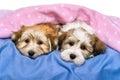 Due carino sono riposo letto