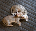 Two cute kittens Royalty Free Stock Image