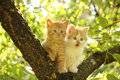 Two cute kittens sitting on the tree branch in summer Royalty Free Stock Image
