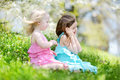 Two cute little sisters in blooming cherry garden Royalty Free Stock Photo