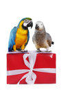 Two cute parrotts on gift box Royalty Free Stock Photo