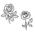 Two dark roses white Stock Image
