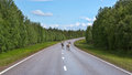 Two deer run on the road in northern finland in summer Royalty Free Stock Photos