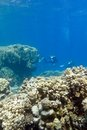 Two Divers Above Coral Reef At...