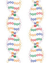 Two DNA helices Royalty Free Stock Photo