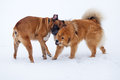 Two dog friends in the snow Royalty Free Stock Photos
