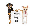 Two dogs with adopt us sign happy holding a saying please Stock Photos