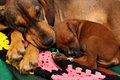 Two dogs cuddle and sleep on a colorful blanket Stock Photography