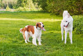 Two dogs on a lawn Royalty Free Stock Image