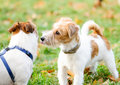 Two dogs meeting while walking at fall park Royalty Free Stock Photo