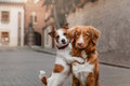 Two dogs in old town Royalty Free Stock Photo