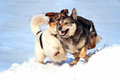 Two dogs play in the snow Royalty Free Stock Photo