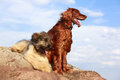 Two dogs on a rock Stock Images