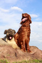 Two dogs on a rock Royalty Free Stock Image