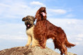 Two dogs on a rock Royalty Free Stock Photo