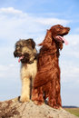 Two dogs on a rock Royalty Free Stock Images