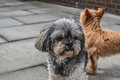 Two dogs standing outside a house Royalty Free Stock Photo