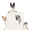 Two dogs and two cats isolated on white background Royalty Free Stock Photos