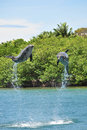 Two dolphins jumping Royalty Free Stock Photo