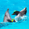Two dolphins playing in the blue water with balls Royalty Free Stock Photo