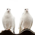 Two doves Royalty Free Stock Photo