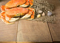 Two dungeness crabs and net with seashells Royalty Free Stock Image