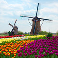 Two dutch windmills over  tulips field Royalty Free Stock Photo