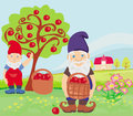 Two dwarfs and apple tree illustration Stock Images