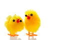 Two easter chicks on white with reflection. Royalty Free Stock Photos