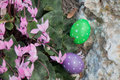 Two Easter eggs near a bunch of Cyclamens