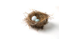 Two eggs in bird nest Royalty Free Stock Photo