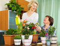Two elderly women with flowerpots aged female friends smiling near table many at home Stock Images