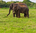 Two elephants Stock Images