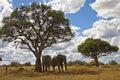 Two Elephants - Botswana Royalty Free Stock Photo