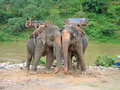 Two elephants stick front of a jungle river , Thailande Royalty Free Stock Photography