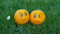 Two enamored oranges in a park Royalty Free Stock Photos