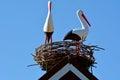 Two European white storks Royalty Free Stock Photo