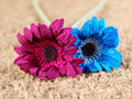 Two fabric flowers of different colors on a straw background Stock Images