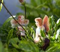 Two Fairy on vegetation Royalty Free Stock Photography
