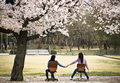 Two females sitting on chairs under blooming cherry tree holding Royalty Free Stock Photo