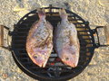 Two fish on grill. Outdoor cooking on a beach Royalty Free Stock Photo