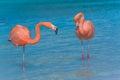 Two flamingos on the beach Royalty Free Stock Photo